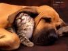 LoveColley9 - éleveur canin Dogzer