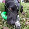 miss97495 - éleveur canin Dogzer