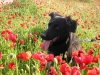 Ptiite-claiirette - éleveur canin Dogzer
