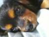 99milie99 - éleveur canin Dogzer