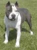 youssef-m - éleveur canin Dogzer
