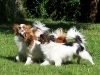 evita92 - éleveur canin Dogzer