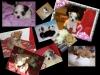 noemie110101 - éleveur canin Dogzer