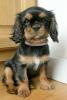 Alison.Passion - éleveur canin Dogzer