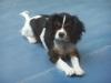 dadeen - éleveur canin Dogzer