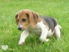 memedu73 - éleveur canin Dogzer