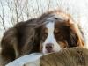 bbsultant - éleveur canin Dogzer