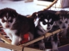 LovelyDay18 - éleveur canin Dogzer