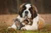 rouroue - éleveur canin Dogzer