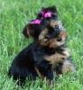 Ophe-34 - éleveur canin Dogzer