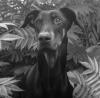Vador - éleveur canin Dogzer