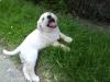 MarieEtGandy - éleveur canin Dogzer
