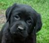 jeanneh20 - éleveur canin Dogzer