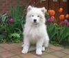 bobbyjuju - éleveur canin Dogzer