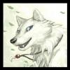 dragonbooster22 - éleveur canin Dogzer