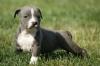 tatadu224 - éleveur canin Dogzer