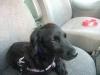 Coxy380 - éleveur canin Dogzer