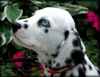 avril21 - éleveur canin Dogzer