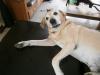 cooky6 - éleveur canin Dogzer