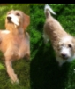 taigounette - éleveur canin Dogzer