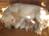 Adnane_8 - éleveur canin Dogzer