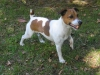 ansy33 - éleveur canin Dogzer