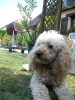bonemine - éleveur canin Dogzer