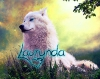 laurynda - éleveur canin Dogzer