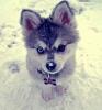 delgadia - éleveur canin Dogzer