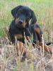 mariiina - éleveur canin Dogzer
