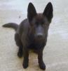 JeanCory - éleveur canin Dogzer