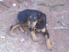 Imad2999 - éleveur canin Dogzer