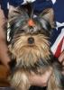 Teebee2000 - éleveur canin Dogzer