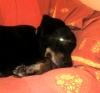 fwauny - éleveur canin Dogzer
