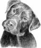 GwenLP - éleveur canin Dogzer