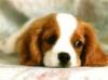karinou29 - éleveur canin Dogzer