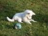 Stephanie...... - éleveur canin Dogzer