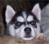 gigiedu36 - éleveur canin Dogzer