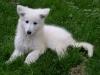 danafairbanks - éleveur canin Dogzer
