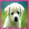 lolo544 - éleveur canin Dogzer