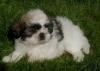 Sabrinadu59 - éleveur canin Dogzer