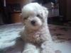 Debyrousi - éleveur canin Dogzer