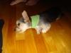 vandevour - éleveur canin Dogzer