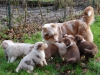 lisa293 - éleveur canin Dogzer