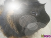 Demon83 - éleveur canin Dogzer