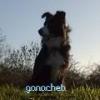 ganacheb - éleveur canin Dogzer
