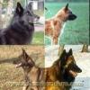 130597 - éleveur canin Dogzer