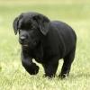 Najad - éleveur canin Dogzer