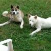 haiika72 - éleveur canin Dogzer