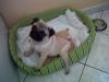 xcanardwc22 - éleveur canin Dogzer